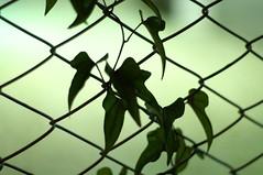 (α) Tags: plant shadow night green