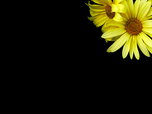 wallpaper desktop flowers