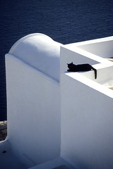Watching (Walter Quirtmair) Tags: 2005 blue white film cat favme santorini greece thebest2005 swq takenbywalter oia eos300 fiveflickrfavs