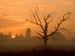 Amber dawn (Kevin Day) Tags: uk sun mist tree sunrise dead gold dawn golden buckinghamshire deadtree slough berkshire kevday langley langleycountrypark chtk