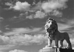 Sad Lion (Dave Smith) Tags: blackandwhite bw stilllife 35mm blackwhite lion rescanned cotcpersonalfavorite ds:camera=eos50 ds:software=gimp ds:software=xsane
