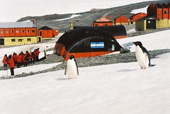 I don't live here (tim ellis) Tags: holiday bird home penguin antarctica photofriday msh0406 msh040610