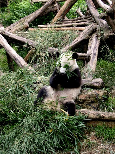 more bamboo, please
