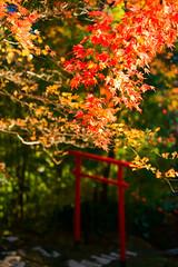 Komatsuji (sonica@2006) Tags: komatsuji it is colored leaves even if december begins colorful japan chiba xm1 xf35mm fujifilm fujinon