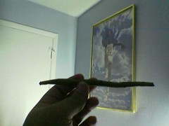 Image(123) (anithen) Tags: anithenblunt blunt blunts