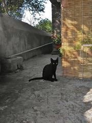 chat (Fif') Tags: greece grèce griechenland hellás hellas égée aegean 2016 limnos lemnos island île grècque greek λήμνοσ cat chat noir