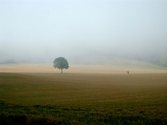 solitary tree (algo) Tags: morning mist tree field misty topv2222 photography interestingness nevel topf50 topv555 topv333 nikon solitude 500v20f nebel topv1111 chilterns topc75 topv444 apex mostinteresting fv10 lonely top20hallfame algo solitary topf100 brouillard top20fav urfavssimplicity enevoado brumas mc05negativespace 1000v40f 123321123n1on1 worldphotodoc2005