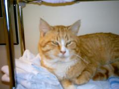 IMAG0075_0058 (amydoll1477) Tags: tigger cats teaser