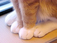 Close Up of Orange & White Cat Paws ~ Reached 10,000+  Views (Pixel Packing Mama) Tags: cute cat nice pretty niceshot superb tl awesome adorable mycats catalog paws awww catsandkittensset ilovemycat furryfriday cutecats naturalight lowperspective catpaws luckylegs exclamationpoints meowscatsv mylifeas catlovers heartlandhumanesociety handsclawsandallkindsofpaws petparade whiteandgingercats pixelpackingmama dorothydelinaporter worldsfavorite mavicafanclub mrbootsoryanceythecat whitegingercats melfanclub catcentury bonzag favoritedpixset mostinterestingaccordingtoflickralgorithmset 20commentsanduppool oreengenesses spcacatspool tobysgroupieswelovelatte animalfeetpawshoofsclaws closerandclosermacrophotographypool orangeset exclamationpointspool pixwithexclamationpointsincommentsset cc13000 macrocloseupshotspool views1000andupdomesticcatsonlypool velvetpawspool allthingsmacropool uploadedtoflickr2005set catmacropool exclamationpointsincommentsset catsaclubfororangecatspool buffcreamcreamsicleorangetabbytanbeigegingercatsset fuzzytoespool pixelpackingmama~prayforkyronhorman obsessivephotographypool fix0313119952v34c45f reached10000views oversixmillionaggregateviews over430000photostreamviews