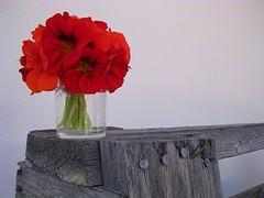 Nasturtiums (jillmotts) Tags: flowers red orange nasturtiums jillmotts