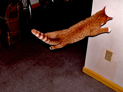 Super Kitty Flies Into Wall (Matt Niemi) Tags: max cats flyingcat funny