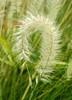 fox wedding (G r e n) Tags: arizona rain wow twins nikon d70 ilikegrass ©bettyschlueter bettyschlueter