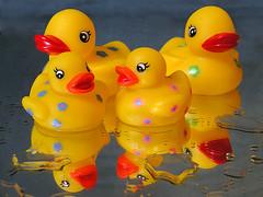 Quack Wrap