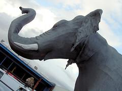 Caged Elephant (optically active) Tags: olympusc5060 elephant portland