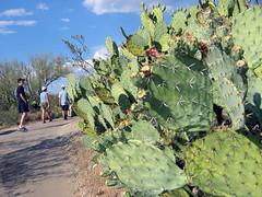 Picture 291 (gocham) Tags: saguaronationalpark usa cactus