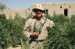 Me and the war on drugs (thirstycactus) Tags: afghanistan pot marijuana