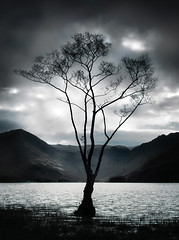 Reach (Aeioux) Tags: uk deleteme5 light deleteme8 sky 15fav lake storm mountains deleteme deleteme2 tree deleteme3 deleteme4 deleteme6 deleteme9 deleteme7 topf25 water silhouette topv111 topv2222 tag3 taggedout clouds contrast wow wonderful dark geotagged grey leaf interestingness fantastic birmingham topf50 topv555 topv333 topf75 saveme4 tag2 saveme5 saveme tag1 saveme2 saveme3 deleteme10 district gorgeous awesome topv1111 been1of100 topc50 topc75 topv999 lakes lakedistrict grow dramatic 100v10f fv5 topf275 topf300 hills topc100 topv5555 valley shade mostfavorited fv10 topv777 brooding reach topf150 topv3333 topv4444 deleteme11 topf100 coniston topf250 topf200 topi muted interestingness2 topc150 topf175 interestingness3 supacrew aeioux 2222v22f 75points 5000v geolat54316667 geolon3066667 aeiouxbirminghamuk
