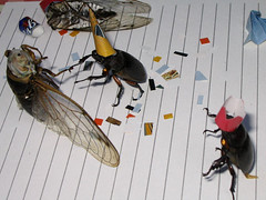 Backyard Bug Party (Matt Niemi) Tags: cicadae bugs beetles