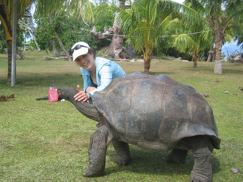 Fotos de otros tipos de Tortugas: