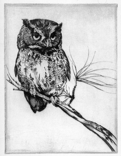 Plate I. Screech Owl