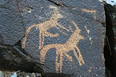 Too Many Legs? (MykReeve) Tags: mongolia gobidesert gobi desert petroglyphs bichigtkhad bayanmountainrange penis goat animal rock carving
