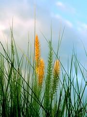 break in the weather (G r e n) Tags: arizona sky topf25 grass 1025fav 510fav topv333 nikon bravo d70 showcase august14th200514 ilikegrass bettyschlueter bettyschlueter