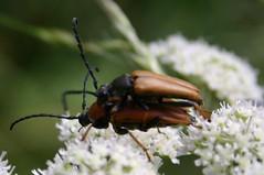 Mating bugs (detail)