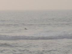 Beach 029 (TheGoodReverend) Tags: beach summer assateague