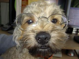 Wicket Geek