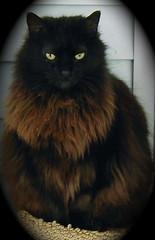TC (Gail S) Tags: cats macro cat nose kitten kittens whiskers gato kodakdx7630zoom manx