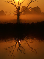 A reflection on death (Kevin Day) Tags: uk england orange sun mist reflection sunrise dead dawn glow deadtree slough berkshire kevday langley treelangleypark