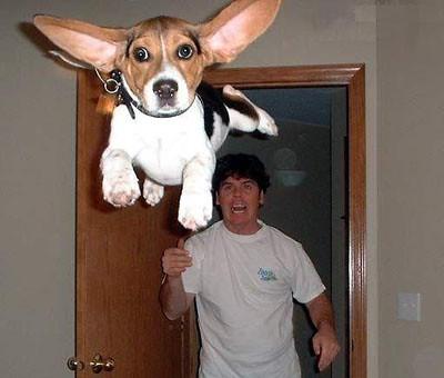 flying dog par Frisbee Girl