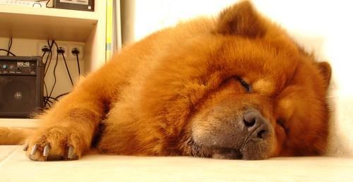 Bosco durmiendo