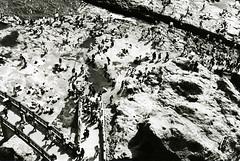 Rockpools (Lil [Kristen Elsby]) Tags: blackandwhite bw beach japan japanese rocks asia crowd fromabove enoshima kanagawa birdseyeview rockpools eastasia 神奈川 神奈川県 江の島 二本