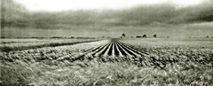 Prairie l small (ken mccown) Tags: deleteme landscape midwest saveme4 saveme6 saveme savedbythedeletemegroup saveme2 saveme3 saveme7 saveme10 saveme8 saveme9 prairie saveme11 safedomino