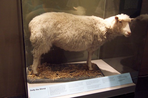 dolly was the cloned sheep who
