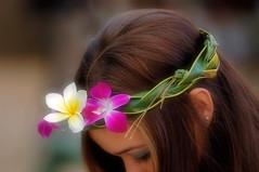 Floral Headband (disneymike) Tags: travel flowers vacation portrait catchycolors hawaii nikon oahu plumeria erin daughter 100v10f luau d100 nikkor headband paradisecove 70200mmf28gvr kapolei nikonstunninggallery