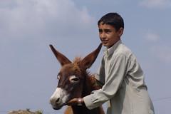 Boy with donkey - posing! (CharlesFred) Tags: mountain mountains green architecture walking countryside asia ezel view walk donkeys muslim country donkey arabic views arabia beast yemen eeyore asino yemeni beastsofburden beastofburden ezels hazra hajjera donleys alhazra 54080208