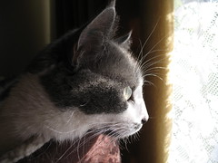 In Profile (HeatherW) Tags: cat spot ccc19