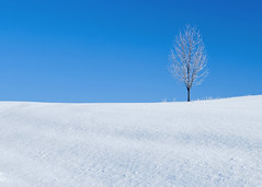 A Winter's Landmark (Todd Klassy) Tags: new morning travel blue light sky snow abstract cold color tree art ice beautiful weather horizontal wisconsin season landscape outside outdoors alone loneliness calendar empty branches horizon fineart hill freezing bluesky single simplicity snowdays lone minimalism happyholidays idyllic wi chill mothernature isolated clearsky christmascard freshsnow beautifulscenery winterweather holidayseason jinglebells stockphotography whitefrost frostbite winterscene rurallife royaltyfree ruralscene beautyinnature christmasseason christmasscene winterseason shovelingsnow freshlyfallen newfallensnow frostline snowcoveredtree bitterlycold winterroadconditions youngtree lifeonthefarm weatherconditions winterinwisconsin horizonoverland wintertravel treecoveredwithice aloneinthewinter