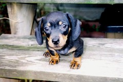 Jimmy Dean on the Day I Got Him
