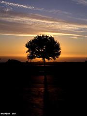 Backlight - Tree - by Madasor