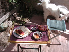 Matzoh with Yuki  -    (Neshamah Spirit Art) Tags: food tucson tea yuki meal athome passover pesach matzoh onourpatio nicoleraisinstern tortugadeldesierto undertheramada whereyukijesseandilived