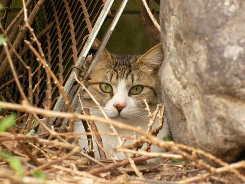 捨て猫に見捨てられ不安なんてないの。相手がご飯をくれる相手かどうかしかないの