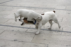 Kung Fu Fighting doggy Style part 3  (Available for Licensing at GETTY Images) (! .  Angela Lobefaro . !) Tags: sky dog chien cute co topf25 animal topv111 cane topv2222 architecture interestingness topf50 topv333 funny pretty action quality gorgeous topv1111 topv999 gimp bleu perro ciel cao hund cachorro nubes kungfu 100views linux getty ces sicily 200views karatekid lovely ubuntu eos350d topf10 brucelee perrito sicilia siracusa kungfufighting gettyimages italians ortigia topv200 actionshot isola caes cagnolino kubuntu digikam flydog wondeful topv300 someonelovesthisshot 20faves 123pets cagnolini bestphotosonflickr 25faves bestpicturesonflickr superaplus aplusphoto holidaysvacanzeurlaub angiereal wowiekazowie flickrdiamond lmaoanimalphotoaward maxgreco angelamlobefaro
