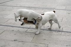 Kung Fu Fighting doggy Style part 3 (! .  Angela Lobefaro . !) Tags: sky dog chien cute co topf25 animal topv111 cane topv2222 architecture interestingness topf50 topv333 funny pretty action quality gorgeous topv1111 topv999 gimp bleu perro ciel cao hund cachorro nubes kungfu 100views linux getty ces sicily 200views karatekid lovely ubuntu eos350d topf10 brucelee perrito sicilia siracusa kungfufighting gettyimages italians ortigia topv200 actionshot isola caes cagnolino kubuntu digikam flydog wondeful topv300 someonelovesthisshot 20faves 123pets cagnolini bestphotosonflickr 25faves bestpicturesonflickr superaplus aplusphoto holidaysvacanzeurlaub angiereal wowiekazowie flickrdiamond lmaoanimalphotoaward maxgreco angelamlobefaro