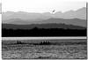 . (anbri22) Tags: bw italy lake birds relax lago italia horizon flight bn uccelli volo silence layers varese orizzonte silenzio anbri