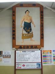 Sumo Portraits