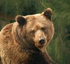 Brown bear by madbronny52