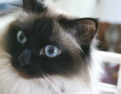 Remmycat